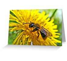 The Wasp and the Dandelion Greeting Card