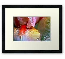 Irises In The Rain Framed Print