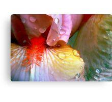 Irises In The Rain Canvas Print