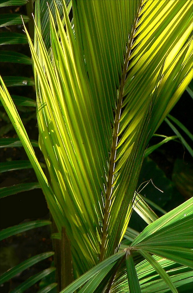 A Palm's New Greenery by paintingsheep