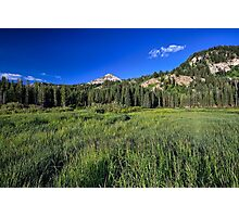 Grassland near Silver Lake Photographic Print