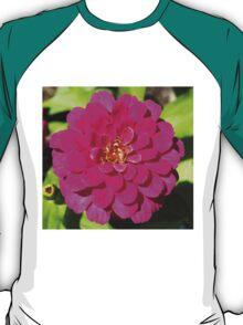 Macro Pink Fuschia Zinnia Flower in the Garden T-Shirt