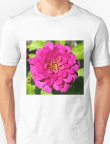 Macro Pink Fuschia Zinnia Flower in the Garden T-Shirt