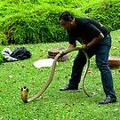 King Cobra Snake, Penang, Malaysia. by Keith Richardson
