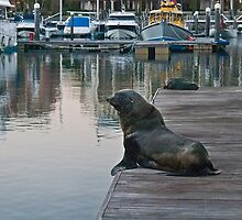 Surveying seal by awefaul