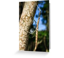 Giant stick insect Greeting Card