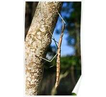 Giant stick insect Poster