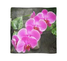Fuchsia Pink Tropical Orchid Flowers near Waterfall Scarf