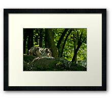 Lazy Summer Days - Timber Wolf Framed Print