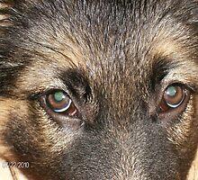 Precious Eyes by vjmarro
