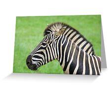 Zebra Posing  Greeting Card