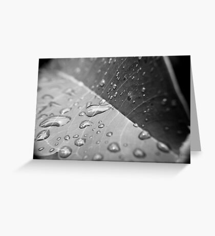After the monsoon Greeting Card