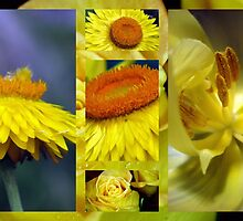 Just Yellow by PPPhotoArt