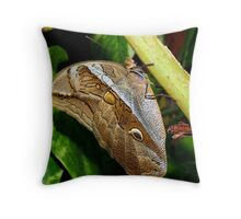 Mournful Brown Owl Butterfly showing his beautiful patterns on its wings Throw Pillow