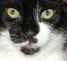 Scampurr's face by nosajnybor