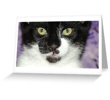 Scampurr's face Greeting Card