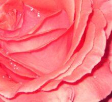 Night Gardening - Rose Burst Sticker