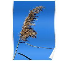 Marsh Reed Poster