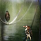 Green Herons at the Harbor by Jonicool