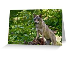 On Alert Greeting Card