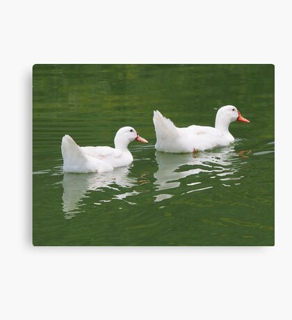 Ducks Canvas Print