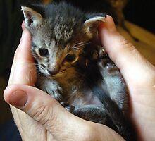 handful of cute by purpleminx