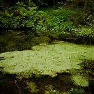 pond by BrainCandy