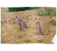 Watching Mum hunt Poster
