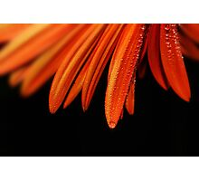 Orange on Black Photographic Print