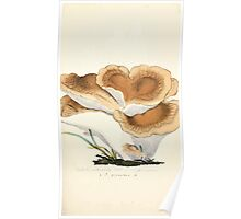 Coloured figures of English fungi or mushrooms James Sowerby 1809 0231 Poster