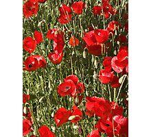 Turkish Poppies Photographic Print