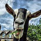 Nosy Goat .  by Lilian Marshall