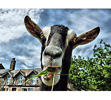 Nosy Goat .  Photographic Print