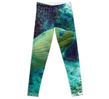 Green Moray Eel  Leggings