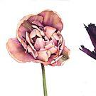 Five Tulips by Helen Lush