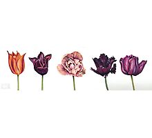 Five Tulips Photographic Print