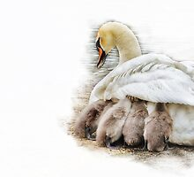 Mother's warm by flashcompact