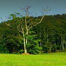 Green Field by spiritoflife