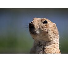 Portrait of a Prairie Dog Photographic Print