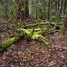 Forest Green by spiritoflife