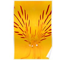 Extreme close-up of a yellow Alstroemeria Poster