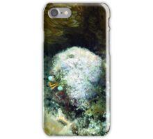 Star Eye Hermit Crab iPhone Case/Skin