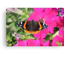 Nature at home(red admiral butterfly) Canvas Print