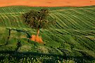 Val d'Orcia Tree by Inge Johnsson