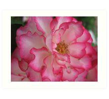 Pink Eye Liner Rose Art Print
