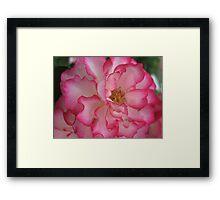 Pink Eye Liner Rose Framed Print