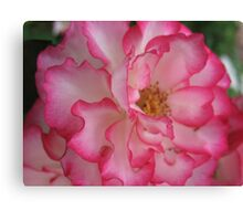 Pink Eye Liner Rose Canvas Print