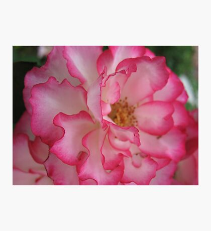Pink Eye Liner Rose Photographic Print