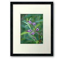 Pretty Purple Plant-Verbenaceae Framed Print