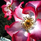 Another Pink Flower by Keith Stephens